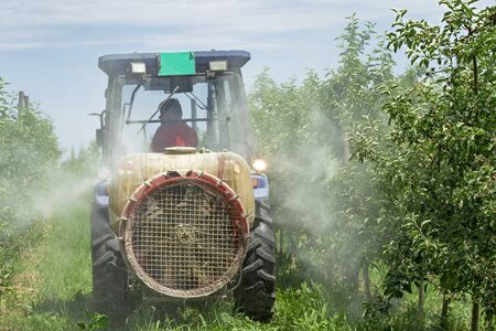 Farmer Driving Tractor Through Apple Orchard in Springtime. Apple Tree Spraying with a Tractor.  Stock Photo