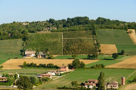 piacenza: In the picture a beautiful view of the hills of Piacenza (CastellArquato) and its vineyards.