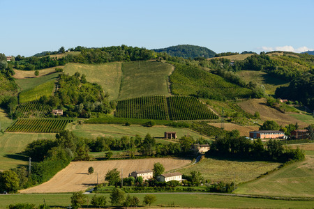 piacenza: In the picture a beautiful view of the hills of Piacenza CastellArquato and its vineyards.