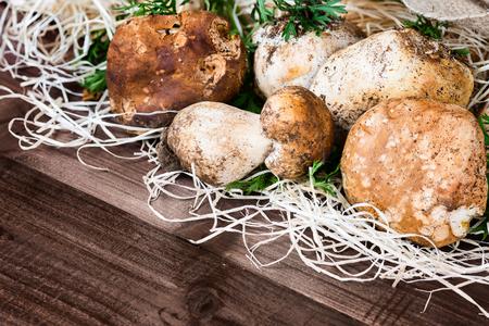 jute sack: funghi nella foto (Boletus edulis, Porcini) - re dei pori funghi, posti su paglia e sacco di iuta su sfondo di legno. Archivio Fotografico