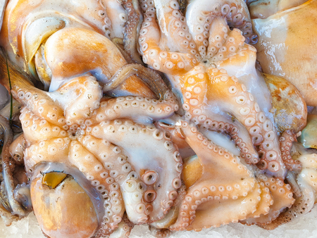 Fresh Octopus on ice for sale, Fish local market stall with fresh seafood Banco de Imagens
