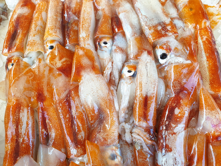 Fresh squid Totani on ice for sale, Fish local market stall with fresh seafood Banco de Imagens