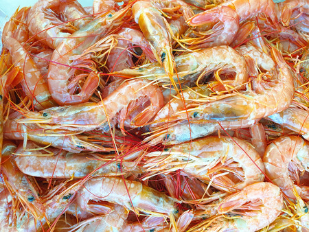 Red argentine shrimps on ice for sale, Fish local market stall with fresh and defrost seafood