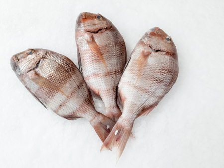 Three snapper sea fish resting on the ice, view from top. Stock Photo