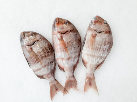 Three snapper sea fish resting on the ice, view from above