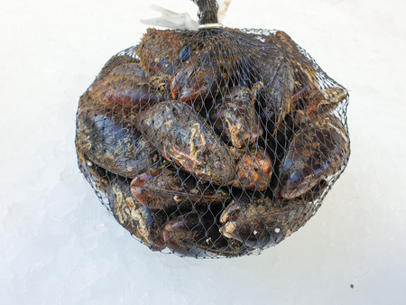 fresh raw mussel in the bag on the ice,close up.