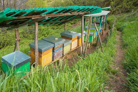 Bee hives on meadow in countryside of Italy,Bergamo(Seriana valley}The houses of the bees are placed on the green grass in the mountains. Private enterprise for beekeeping.  Honey healthy food product 写真素材