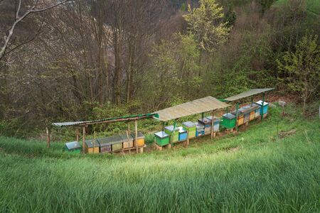 Bee hives on meadow in countryside of Italy,Bergamo(Seriana valley}The houses of the bees are placed on the green grass in the mountains. Private enterprise for beekeeping. Honey healthy food products