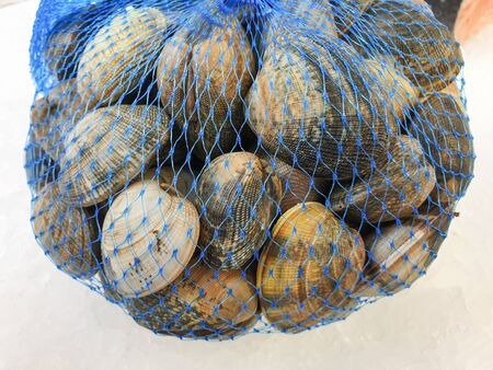 fresh raw  hard clam in the bag on ice,close up. 写真素材