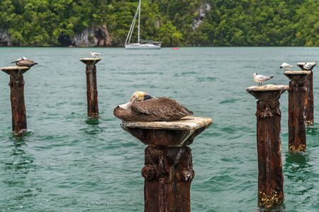 Los Haitises National Park nicknamed the Caribbeans Halong Bay.multicolored tropical birds and manatees. The coast is dotted with small islets where frigates and pelicans nest.Samana peninsula, Dominican Republic.