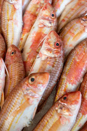 Red striped mullet on ice at the seafood market.Mediterranean fish and it is also the best ingredient of the diet. Standard-Bild