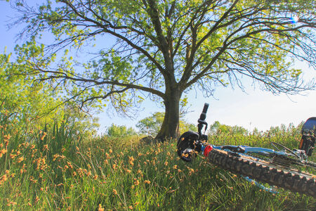 Bicycle lying in grass, surrounded by flowers  With a tree  Stock Photo