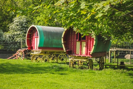 A pair of horse-drawn gypsy caravans in a field under the trees  Located in West Ireland