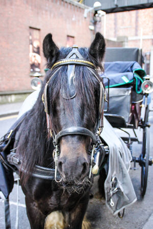 Horse and carriage in a street  Stock Photo