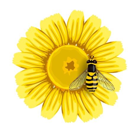 Bee on flower  Illustration