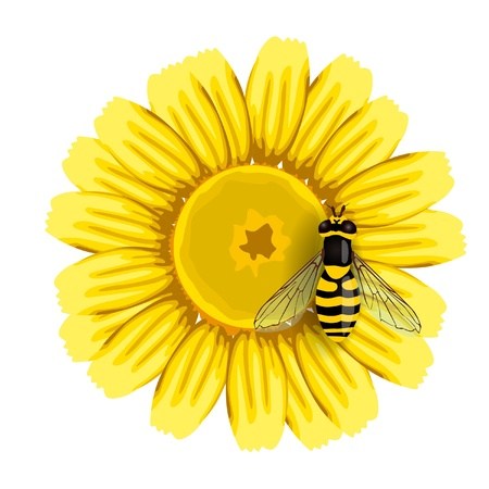pollination: Bee on flower  Illustration