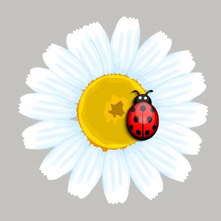 camomile tea: Ladybug on flower