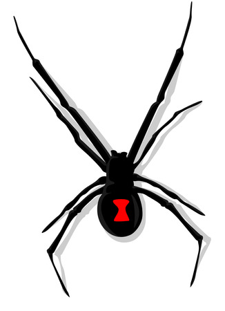 viuda: Negro de la ara�a viuda