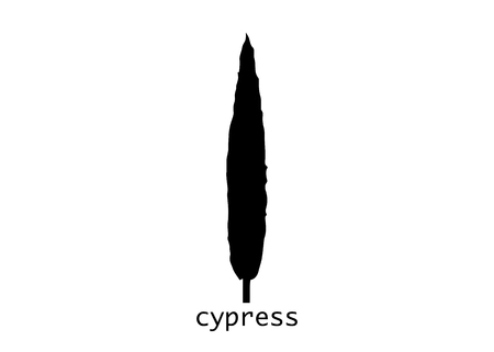 Cypress icon. Simple illustration of cypress vector icon for web. Italian silhouette cypress trees the typical tuscan landscape. Vector isolated or white background