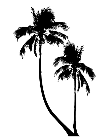 Tropical palm trees, black silhouette and outline contours, vector isolated transparent or white background