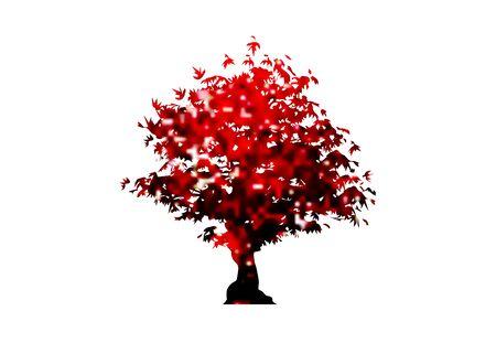 vector red maple tree icon isolated on white background. Acer Palmatum, Deshojo, Japanese maple plant bonsai tree. Scarlet Princess Dwarf Japanese maple Illustration