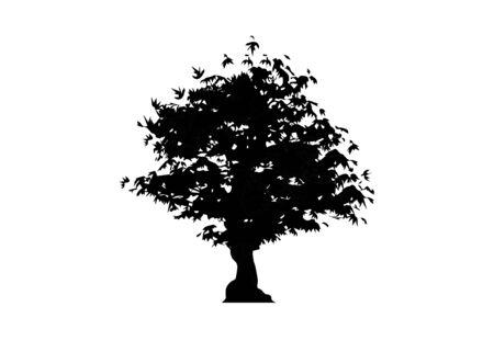 vector silhouette maple tree icon isolated on white background. Acer Palmatum, Deshojo, Japanese maple plant bonsai tree. Scarlet Princess Dwarf Japanese maple in black and white color Illustration