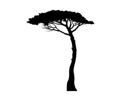 Maritime Pine tree, Pinus Pinaster mediterranean plant, vector isolated on white background Ilustración de vector