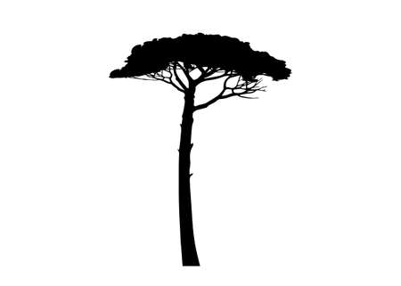 Maritime Pine tree, Pinus Pinaster mediterranean plant, vector black silhouette isolated on white background