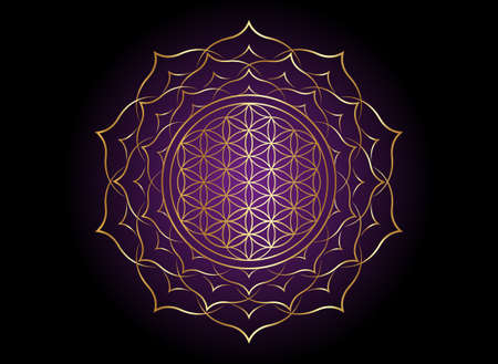 Flower of Life, Yantra Mandala in the lotus flower, Sacred Geometry. Bright golden symbol of harmony and balance. Mystical gold talisman, vector isolated on black and purple background 向量圖像