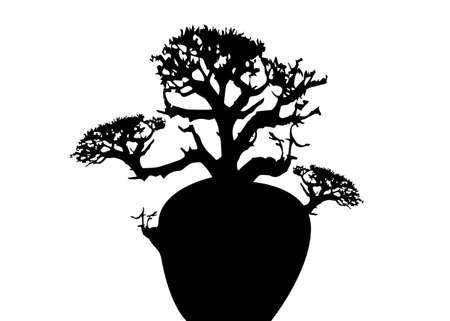 Boab or Baobab Tree Vector isolated, Andasonia tree silhouette icon. Australian big baobab isolated on white background