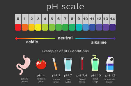 scale of ph value for acid and alkaline solutions, infographic acid-base balance. scale for chemical analysis acid base. Examples of pH conditions, vector illustration isolated or black background 向量圖像