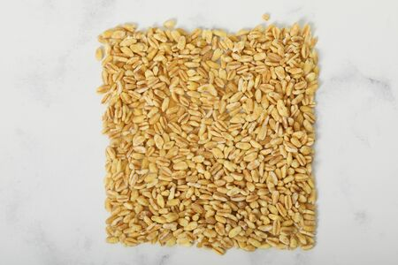 Wheat Grains Wheat Grains on white backgraound vegetarian food dry plant
