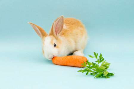 Adorable rabbit eating
