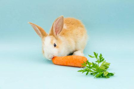 Adorable rabbit eating