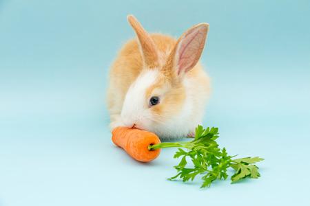 lapin: Adorable rabbit eating