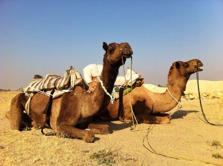 soul: Camel rides Stock Photo