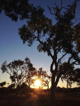 hope: Sunset & Tree Stock Photo