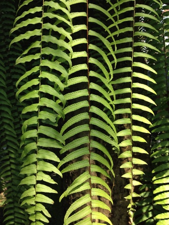 shiny metal: Fern leaves ,rain firest , nature