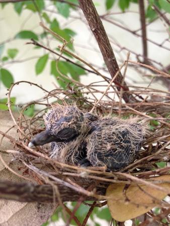 birdeye: Early bird in a nest