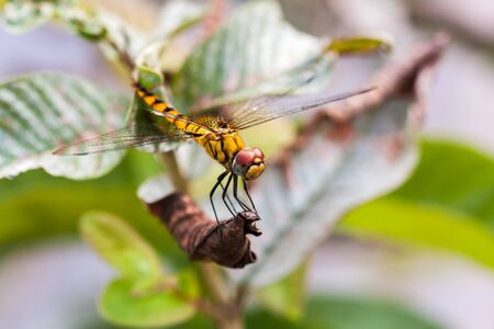 Yellow dragon fly sitting on a plant Imagens