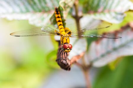 Yellow dragonfly sitting on a plant Imagens