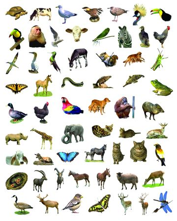 A lot of animals photo