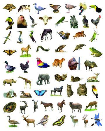 Veel van de dieren