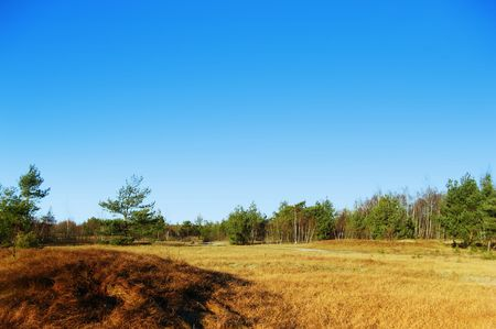 Green grass and blue sky Stock Photo - 2570136