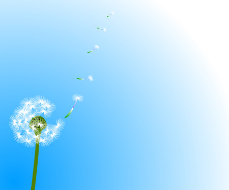 Dandelion Stock Vector - 2576325