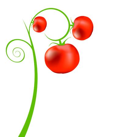 market gardening: Tomato tree Illustration