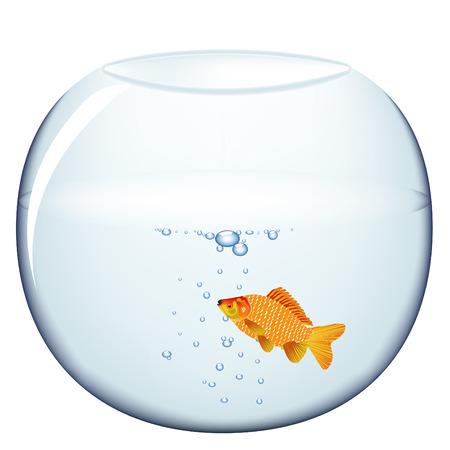 gold fish bowl: Aquarium with gold fish, vector illustration