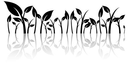 weegbree: Bladeren