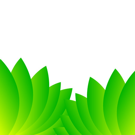 sorrel: Leaves