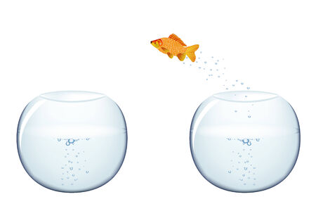 goldfish jump: Gold fish jumping
